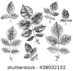 leaf of roses. set of hand... | Shutterstock . vector #438032152