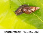 snail on the green leaf | Shutterstock . vector #438252202