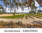 View Of New Vineyard From Unde...