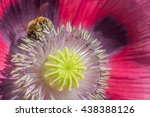 Honey Bee Climbs On The Inside...