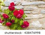 Beautiful Rose Bush Against...