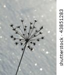 fennel  snow | Shutterstock . vector #43851283