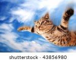 Stock photo flying funny kitten 43856980