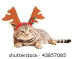 Stock photo funny kitten wearing deer horns 43857085