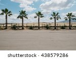 Palm Trees Lined Up Along A...