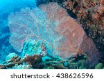 Small photo of Gorgonian (Alcyonacea) of Red Sea.