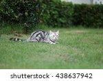 cat | Shutterstock . vector #438637942