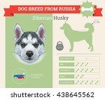 vector info graphic of siberian ... | Shutterstock .eps vector #438645562