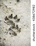 Color Image Of A Dog Paw...