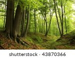 green forest with old trees | Shutterstock . vector #43870366