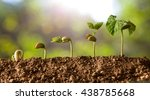 Germinated Seeds Sequence And...