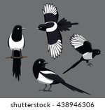 Bird Poses Black Billed Magpie...