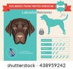 vector info graphic of labrador ... | Shutterstock .eps vector #438959242