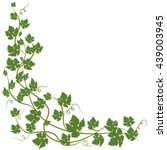 frame with vine leaves on white ... | Shutterstock .eps vector #439003945