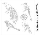 set of tropical birds hand draw.... | Shutterstock .eps vector #439020766