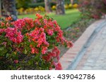 Bougainvillea Flower  Red...