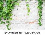 Climber Plant With White Brick...