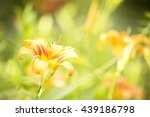 Orange Flower Spring Flowers...