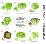 list of salad vegetables and... | Shutterstock .eps vector #439227505