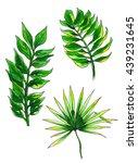 green tropical exotic... | Shutterstock . vector #439231645