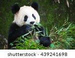 Cute Eating Panda  China