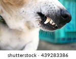 close up on a dog's mouth  ... | Shutterstock . vector #439283386
