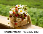 strawberries and daisies in... | Shutterstock . vector #439337182