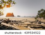 Landscape of Rialto Beach in Olympic National Park in LaPush Washington State, USA. This landscape has a number of logs, forest, and Pacific North West coastline
