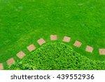 pathway in garden with a... | Shutterstock . vector #439552936
