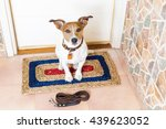 Jack Russell Dog Waiting  At...