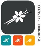 vanilla flower and pods vector... | Shutterstock .eps vector #439737556