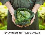 organic vegetables. farmers...   Shutterstock . vector #439789636