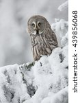 Stock photo great grey owl srix nebulosa in snowy woods 439856068