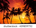 Tropical Beach With Palm Tress...