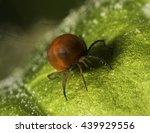 Small photo of Underwater Mite (Acari) 1,5 mm.