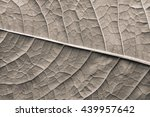 Texture Of A Surface Of A Leaf...