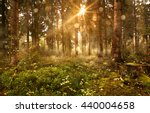 sun shines into forest | Shutterstock . vector #440004658