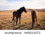 Horses Grazing In The Plains O...
