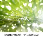 bokeh light green abstract... | Shutterstock . vector #440336962