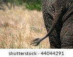 Elephant   Tarangire National...