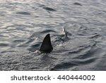 dorsal fin of great white shark ... | Shutterstock . vector #440444002