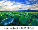 natural lotus mountain in... | Shutterstock . vector #440558845