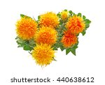 Safflower In A White Background