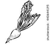 sugar beet sketch vegetables... | Shutterstock .eps vector #440644195