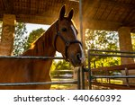 Horse In The Corral Stables