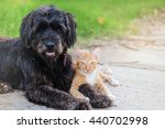 Stock photo friendship from different species black dog laying with orange cat on concrete road 440702998