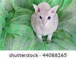 peterbald hairless cat on the... | Shutterstock . vector #44088265