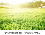 soft focus on green cutting... | Shutterstock . vector #440897962