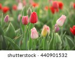 field of beautiful blooming... | Shutterstock . vector #440901532