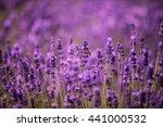 lavender flowers closeup.  | Shutterstock . vector #441000532